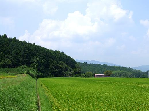 20100825-9.jpg